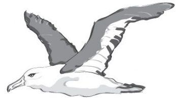 Flapper the Bird